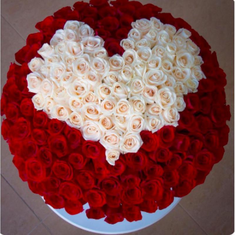 201 rose
